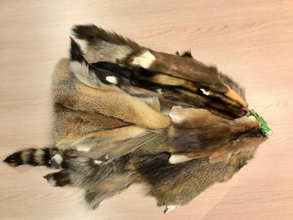 Lernmittel Fellsortiment 5 Wildarten, Fuchs, Waschbär, Steinmarder, Iltis, Nutria