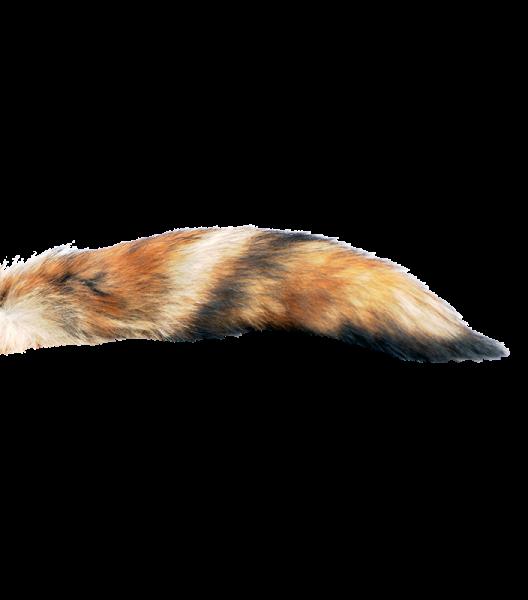 Fuchslunten