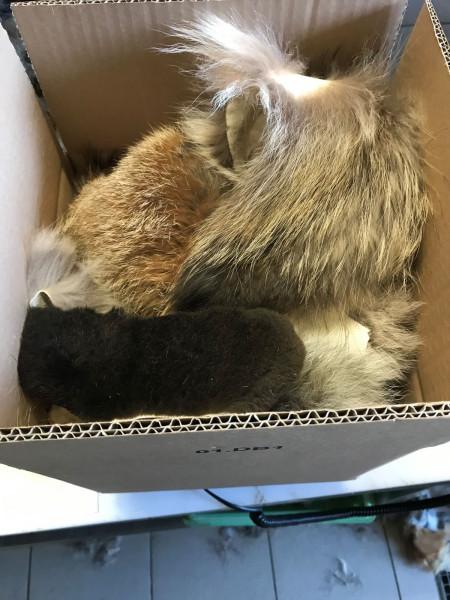 Fellreste Marderhund, Nutria, Waschbär, Fuchs, 500 g
