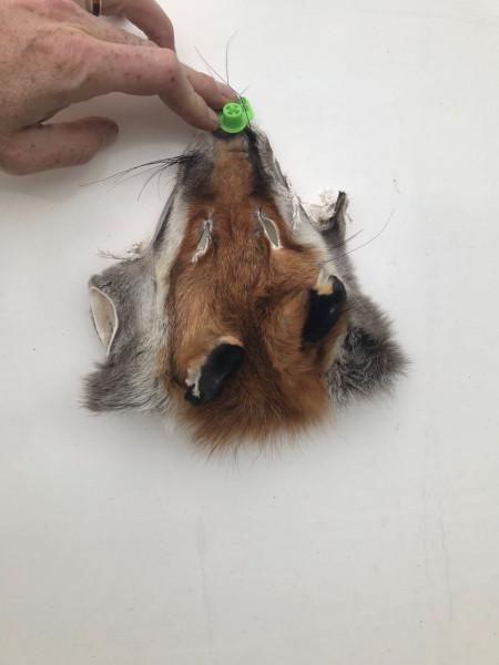 Fuchsmaske