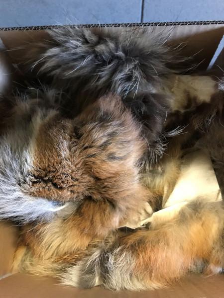 Fellreste Fuchs, Waschbär, Marderhund, Steinmarder, 500 g
