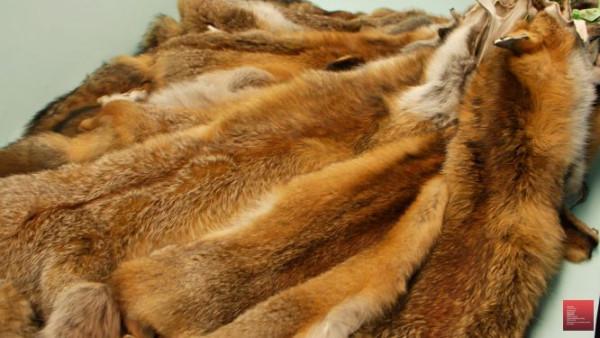 Theodora medium Toplot regular, 47 skins
